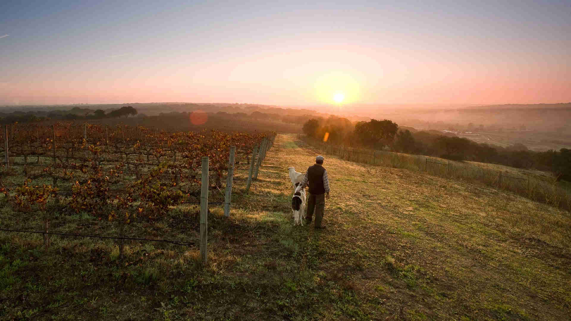 Weinproduzent-Wein-Online-Shop
